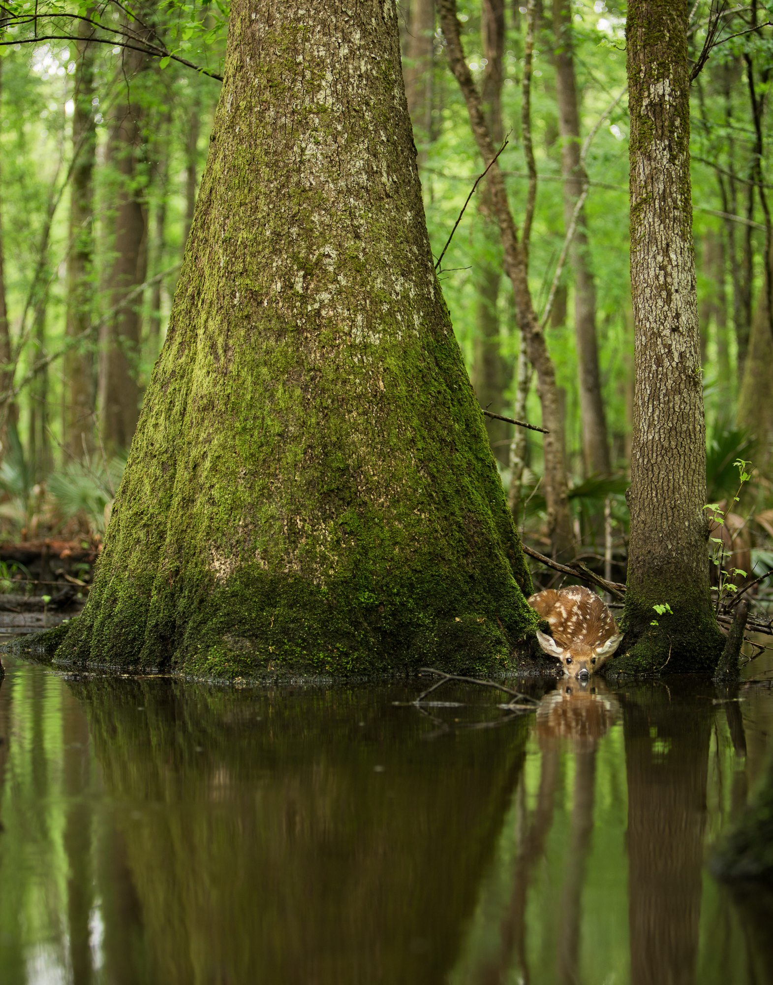 Southern wetland forests are home to hundreds of endemic species, found nowhere else on earth.