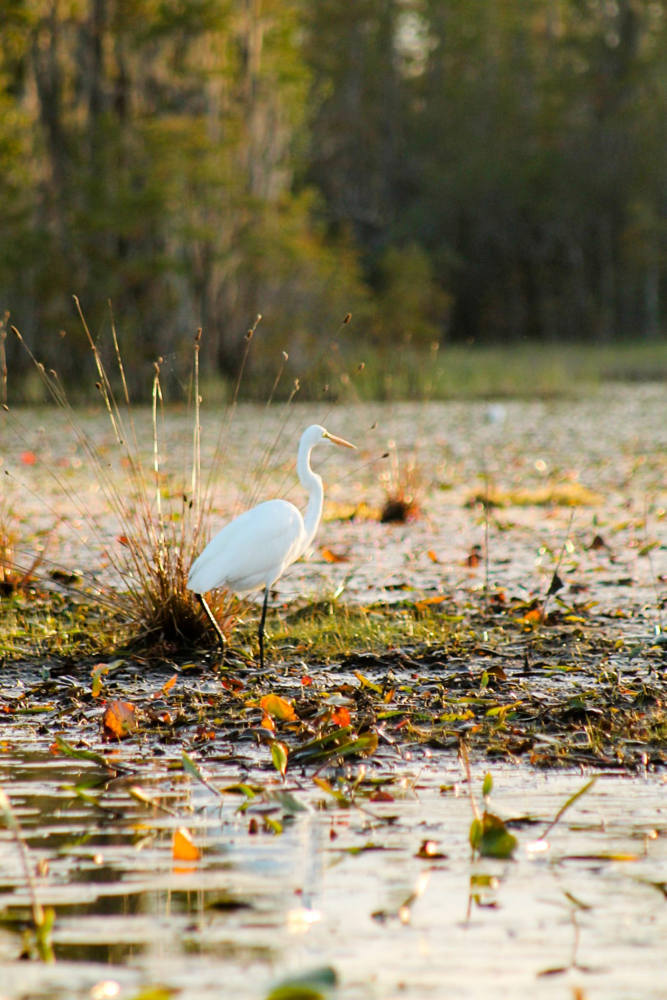Wetland forests provide safe passage for many threatened and non-threatened birds.