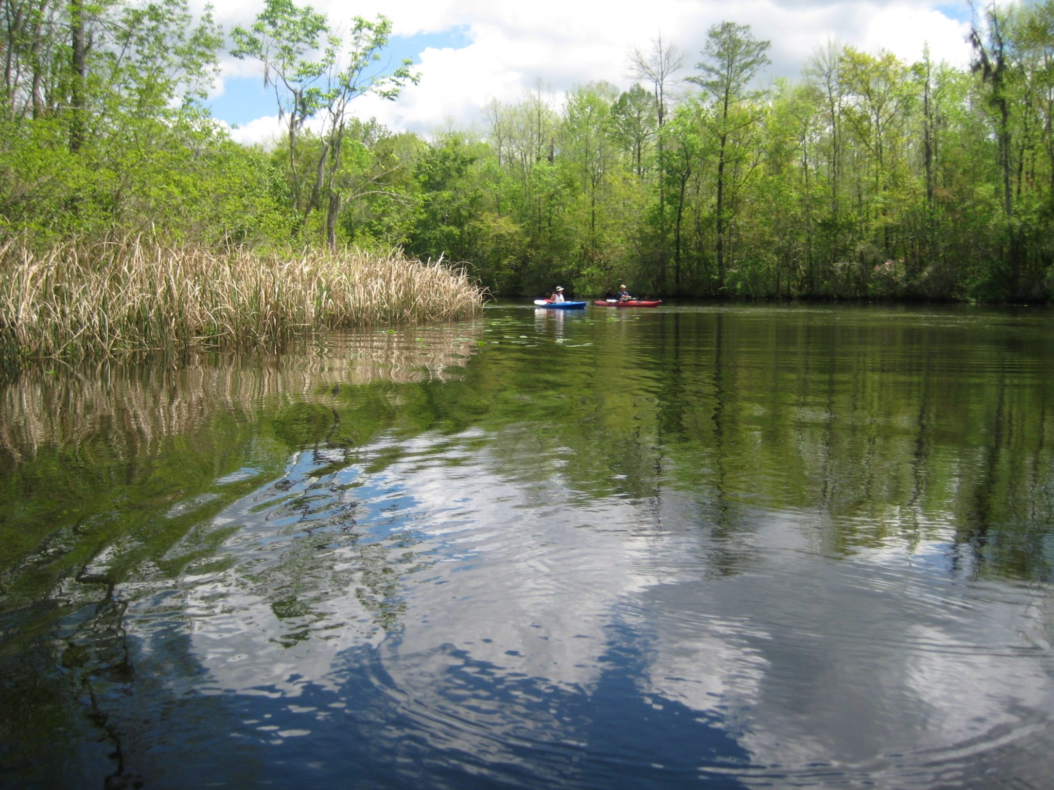Wetland forests provide many recreation opportunities, including fishing, hunting, and boating.